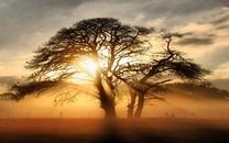 阳光与树精选高清桌面壁纸