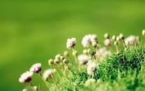 小清新唯美植物花卉背景图片壁纸