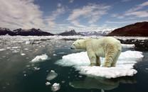 可爱北极熊图片壁纸