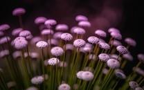 植物图片大全大图唯美风景图片