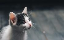 可爱软萌猫咪图片壁纸