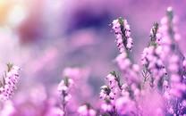 花朵图片大全-花朵图片壁纸