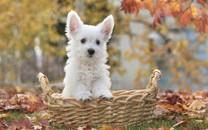 小狗狗图片-小狗狗图片壁纸大全