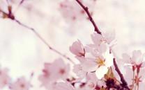 清新色调:超美花卉新意摄影壁纸