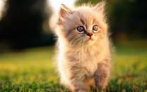 可爱猫咪高清壁纸