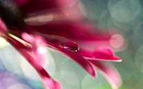 花朵上的水滴壁纸图片大全