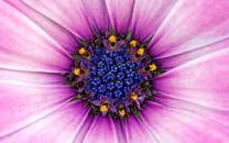 紫色花朵壁纸-紫色花朵图片大全