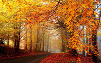 林间小路壁纸-林间小路图片大全