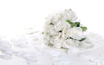 清纯白玫瑰壁纸-白玫瑰图片壁纸大全