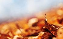 梦幻色彩秋之韵壁纸欣赏