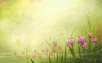 炫彩花卉高清桌面壁纸