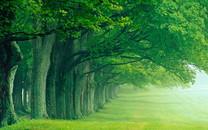 青山绿水图片-青山绿水图片大全