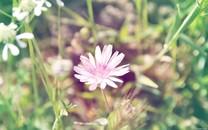 小清新花卉壁纸-小清新花卉图片大全