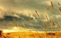 枯黄的秋草图片壁纸