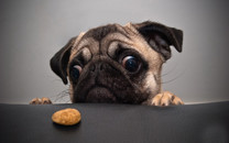 可爱的小狗图片-可爱的小狗图片大全