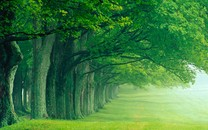 树木护眼桌面壁纸