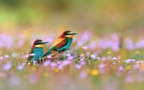 鸟语花香宽屏桌面壁纸