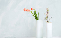 室内花高清桌面壁纸