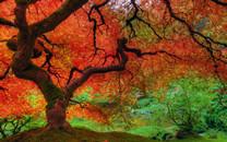 秋叶迷离桌面壁纸