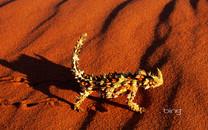 澳大利亚风景图片-澳大利亚风景图片大全