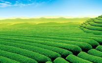 碧绿的植物护眼桌面壁纸