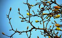 树梢上的嫩芽植物桌面壁纸