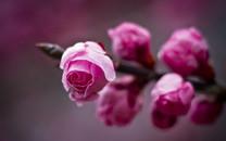 春天的花蕾图片-春天的花蕾图片大全
