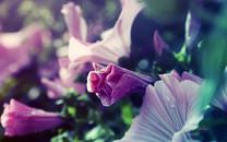 梦幻花朵图片-梦幻花朵图片大全