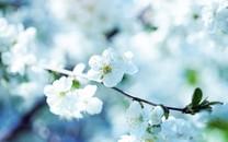 春天风景图片-春天风景图片大全