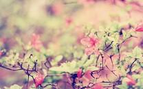 自然唯美的花儿桌面壁纸