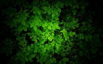 大自然的绿色图片-大自然的绿色图片大全