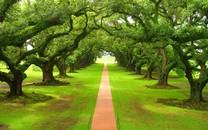 大自然的绿色美景图片壁纸大全