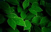 清新绿色植物图片-清新绿色植物图片大全