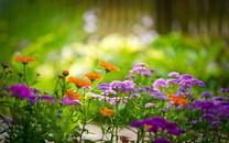 绿色的自然美景图片-绿色的自然美景图片大全