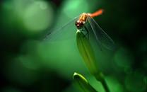 自然美景图片-自然美景图片大全