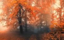 唯美的秋风景桌面壁纸