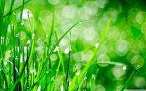 自然花朵图片-自然花朵图片大全