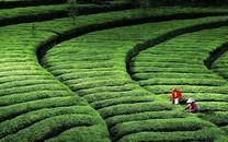 绿色环境图片-绿色环境图片大全