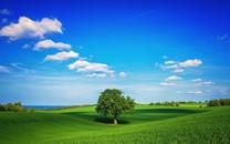 高清绿色美景壁纸桌面