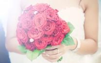 情人节玫瑰花图片壁纸大全