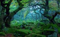 树林唯美景色壁纸桌面