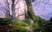 丛林唯美景色电脑壁纸