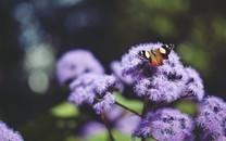 花朵上的蝴蝶图片壁纸
