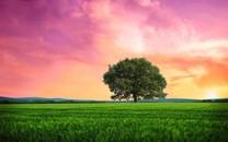 自然景色桌面图片