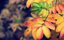 微距树叶唯美壁纸桌面