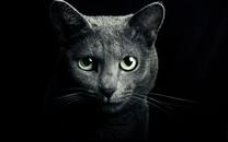 大图猫咪高清壁纸桌面