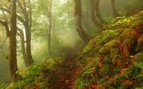 红树林唯美电脑壁纸