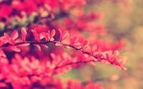 树叶图片唯美图片壁纸