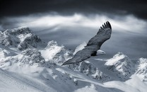 最霸气的鹰图片壁纸2