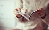 小白鼠可爱宽屏电脑壁纸